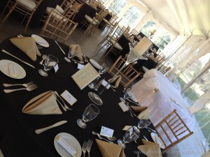 gold ciavari chairs